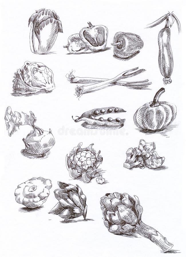 Seasonal vegetables royalty free illustration