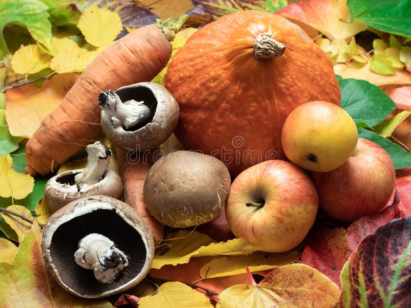 Mushrooms, apples, sweet patato, red kuri squash and carrots are royalty free stock photo