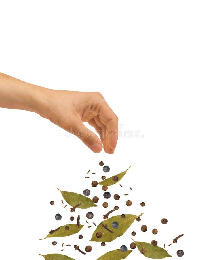 Free Seasoning Stock Photography - 12604372