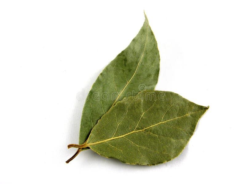 Seasoning, bay leaf stock image