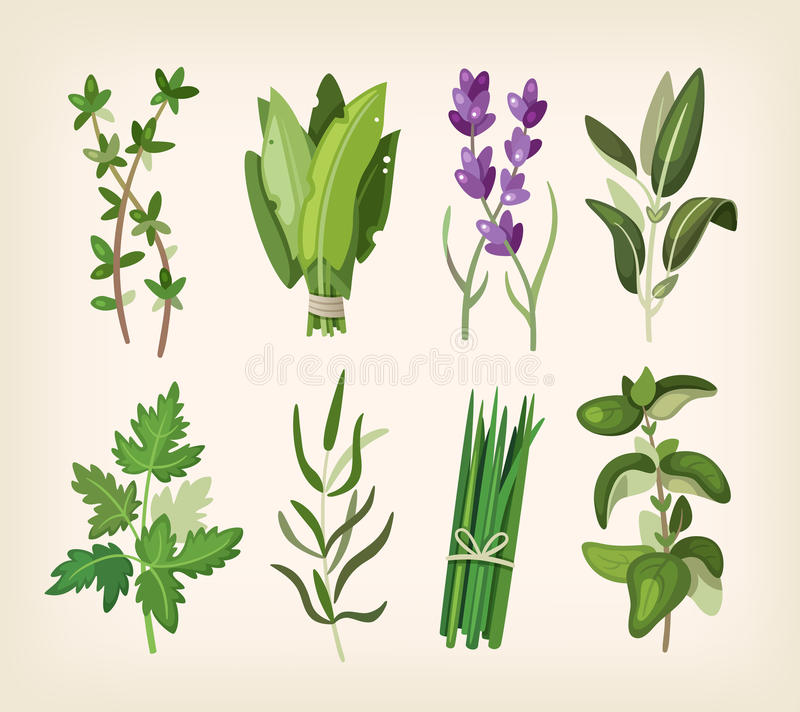 Seasoning and dressing herbs. Green fragrant seasoning and dressing herbs for soup, salad, meat and other dishes royalty free illustration