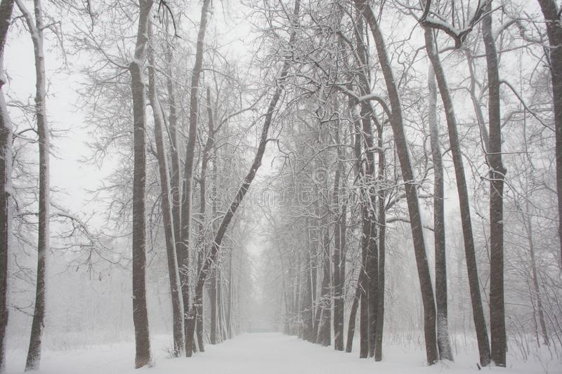 Snow forest textures in black and white royalty free stock photography