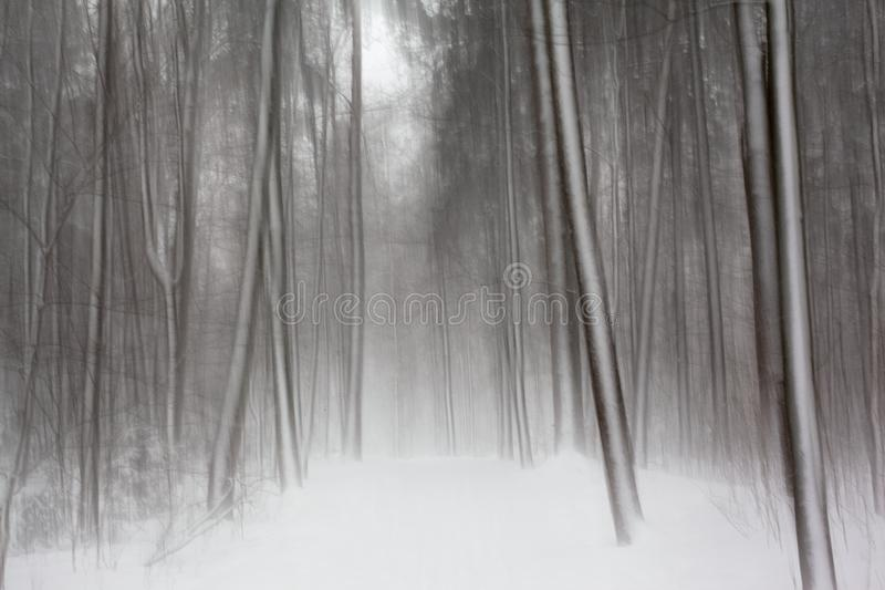 Snow forest textures in black and white stock images