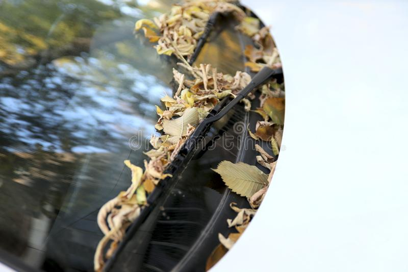 Seasons. Top view on the hood of a white car in the fall. Dry leaves on the windshield. Close-up, free space, horizontal. Concept of seasons stock image