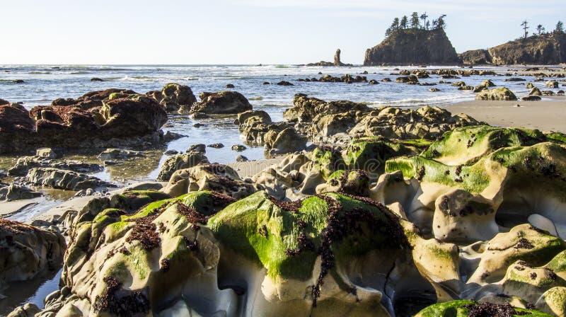 Seastack圣所和空心绿色杂草处于低潮中第二个海滩奥林匹克国家公园 免版税库存照片