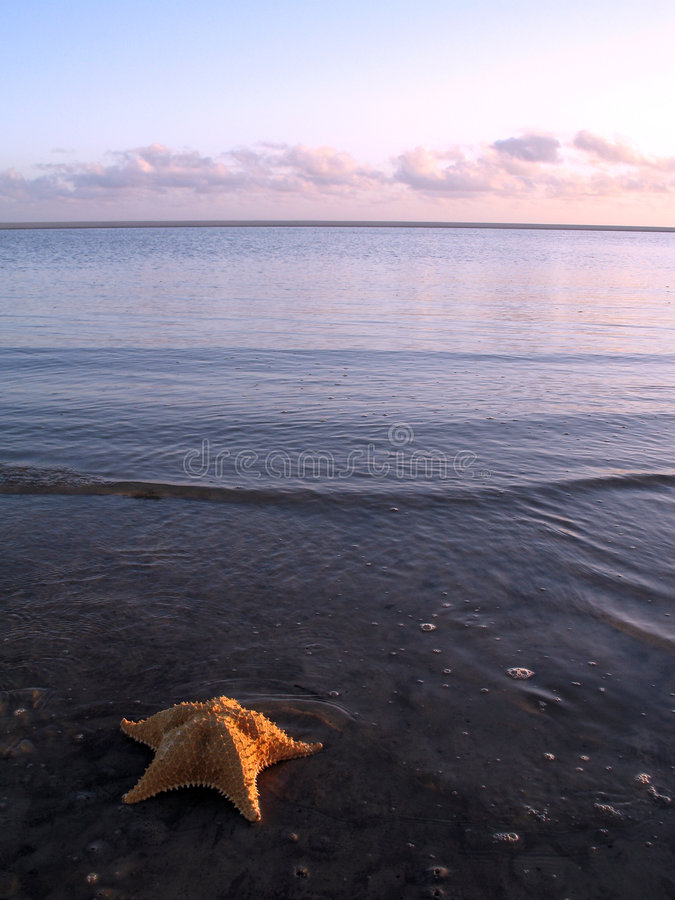 Download Seastar photo stock. Image du ondes, plage, sunrise, océan - 735712