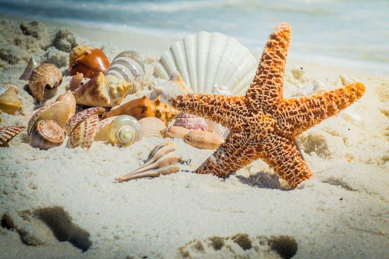 Seastar стоковое фото rf