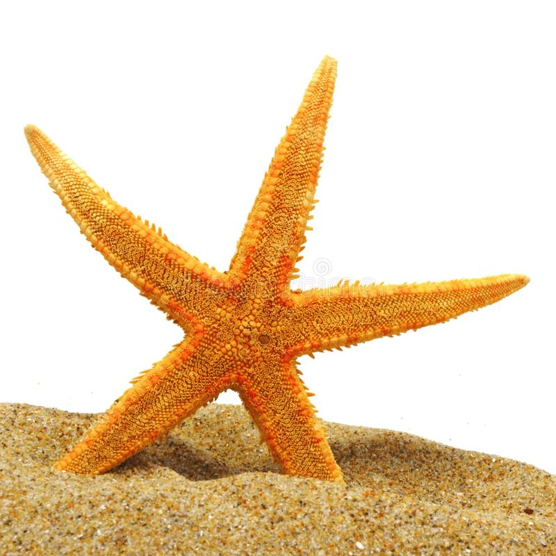 Seastar e banca della sabbia fotografia stock