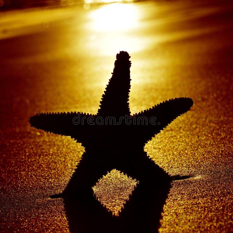 Seastar en la orilla de una playa en la puesta del sol fotografía de archivo