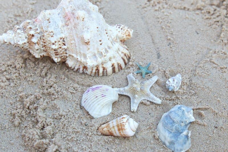 Seastar en overzeese shells bij het strand stock foto