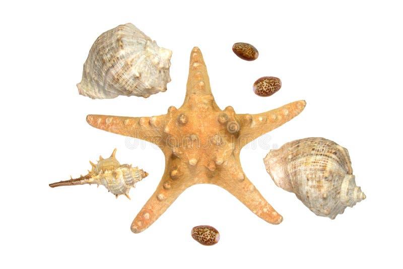Seastar en sommige shells die over wit wordt geïsoleerd& royalty-vrije stock foto's