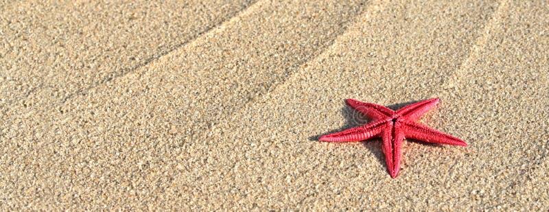 Seastar na areia da praia imagem de stock