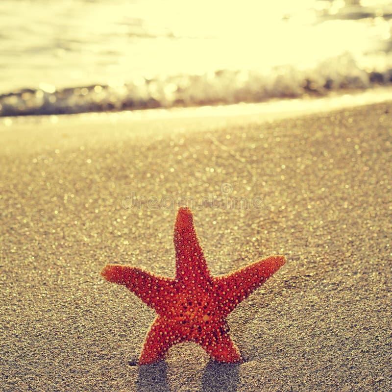 Seastar na costa de uma praia imagens de stock royalty free