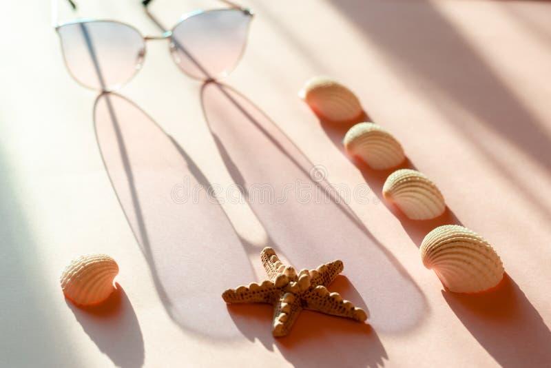 Seastar, snäckskal och den rosa solglasögon med metallramen gjuter en lång skugga på den rosa yttersidan Sommaren semestrar begre royaltyfri bild