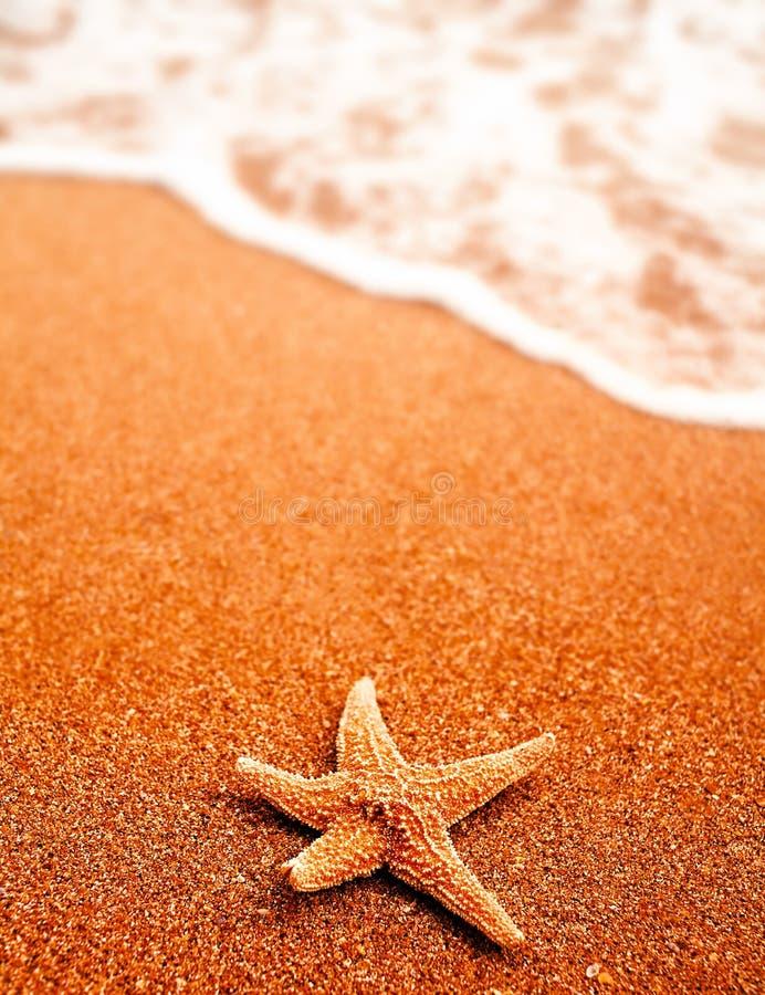 Seastar sulla sabbia della spiaggia e dell'onda venente molto copyspace, nessuno concetto intorno, di viaggio o di festa immagini stock libere da diritti