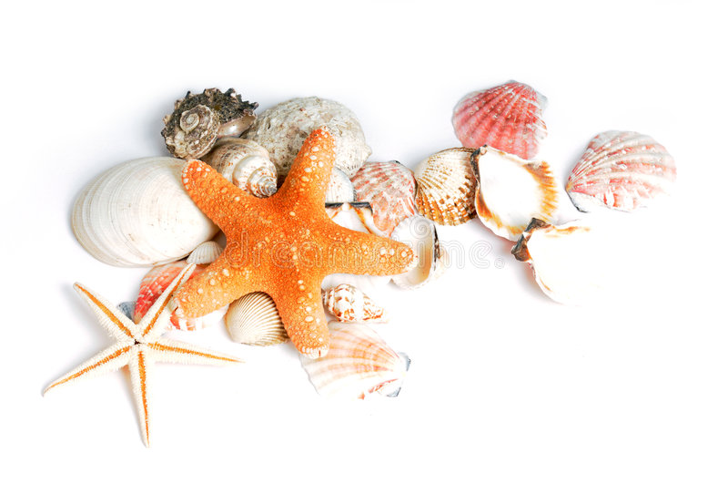 seastars κοχύλια στοκ φωτογραφία