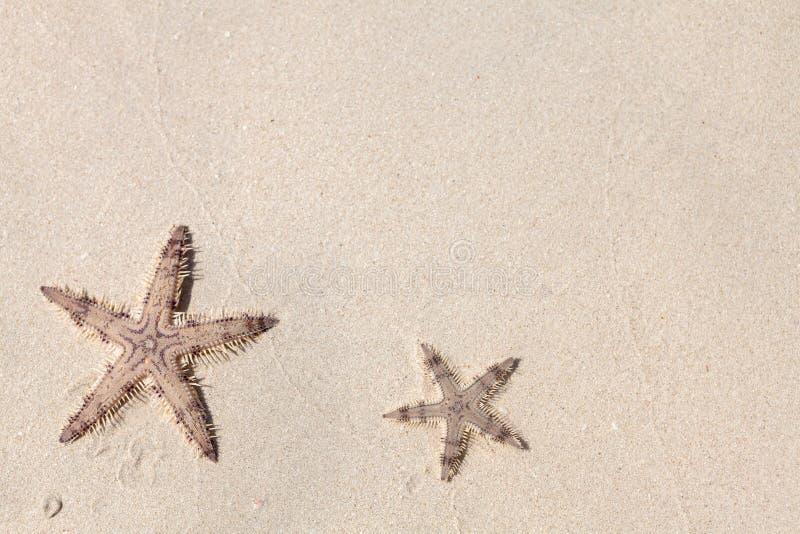 Seastars na areia da praia imagem de stock
