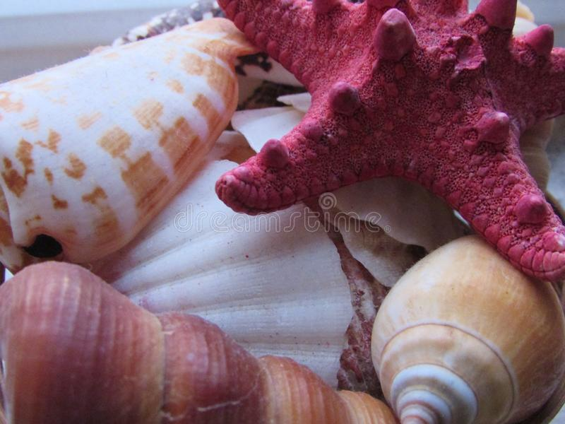 Seastarsdetails royalty-vrije stock foto