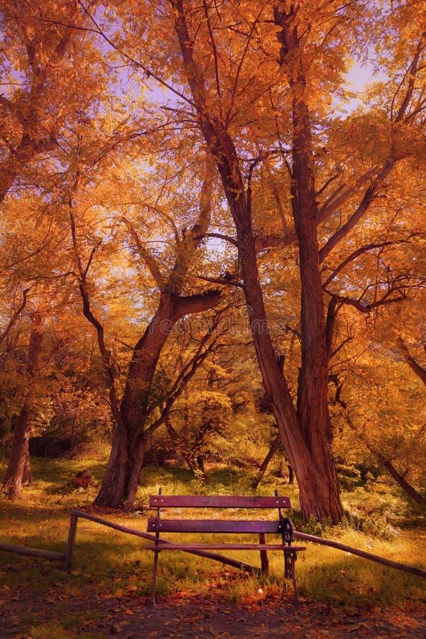 Seat en el bosque fotos de archivo libres de regalías