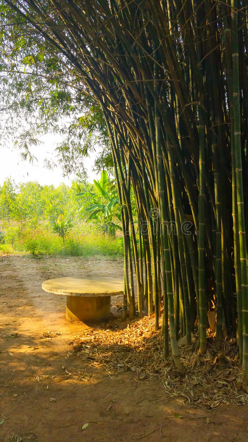 Seat met bamboe wordt omringd dat royalty-vrije stock foto's