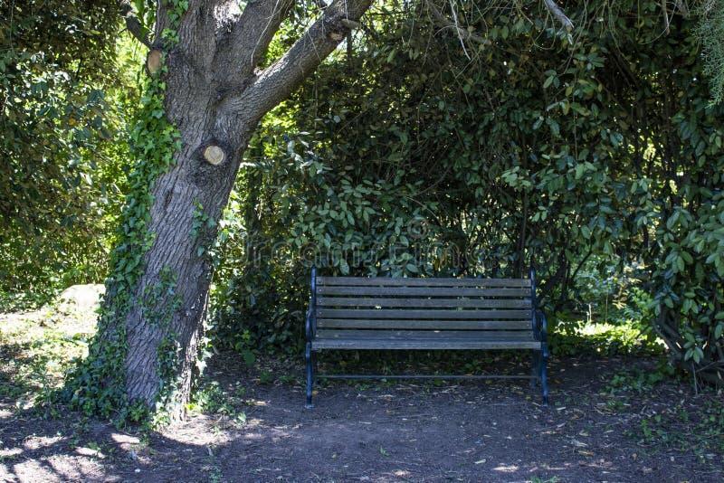 Seat nahe bei Baum Schattenplatz für Rest bei heißem Wetter lizenzfreie stockbilder