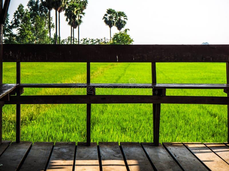 Seat wśród olśniewać zielonych ryż pola w Tajlandia fotografia royalty free