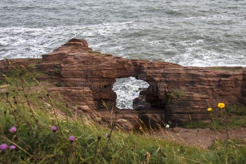 Seaton Cliffs Arbroath i Angus scotland arkivfoton