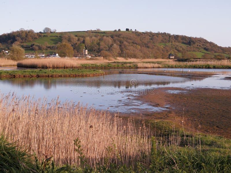 Seaton Wetlands nel Devon immagine stock
