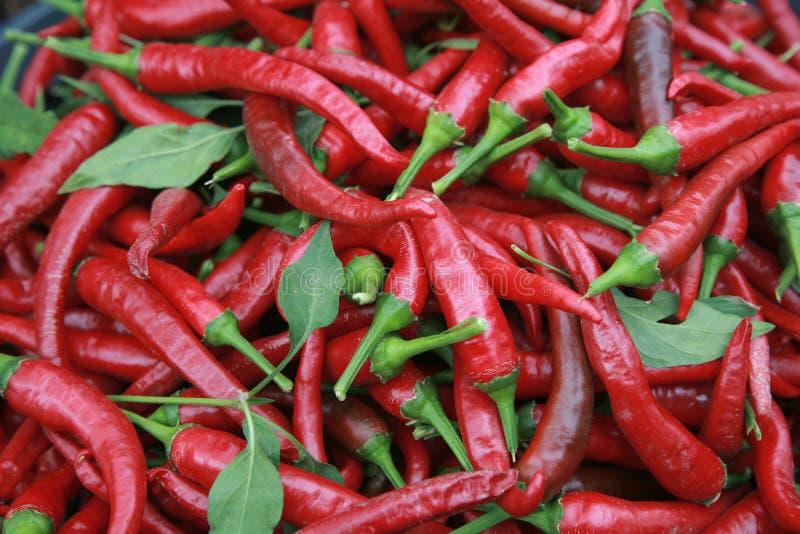 Poivrons de piment d'un rouge ardent photographie stock