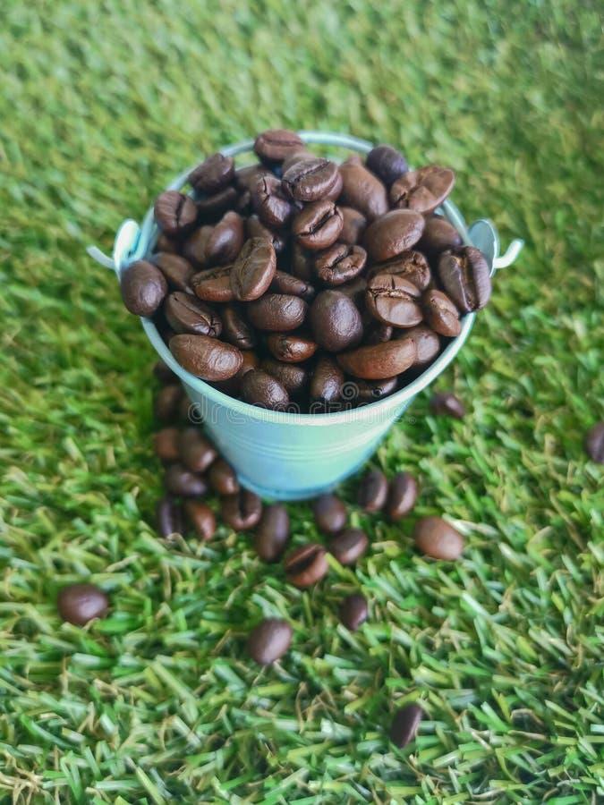 seau de ‹de the†de ‹d'in†de ‹de coffee†sur le vert de champ images stock