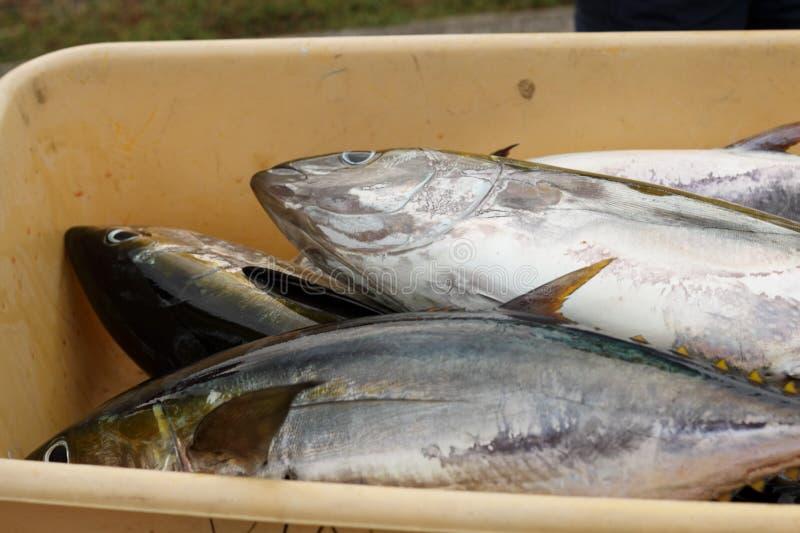 Seau de poissons images stock