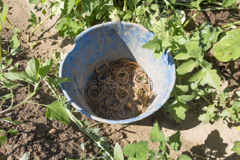 Seau de Rubberbands pour le groupe d'épinards photo libre de droits