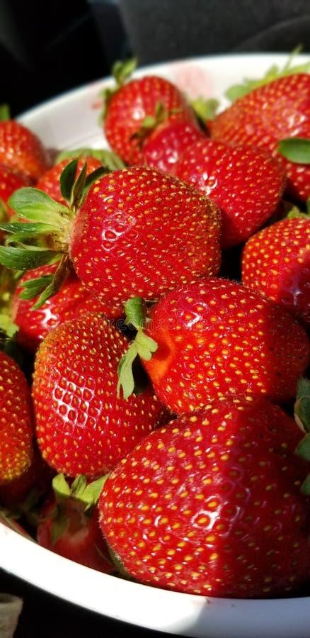 Seau frais rouge mûr de fraises ensoleillé images stock