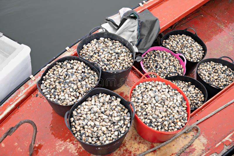 Seaux avec les palourdes fraîches sur le bateau de pêche prêt à aller à la poissonnerie photo stock