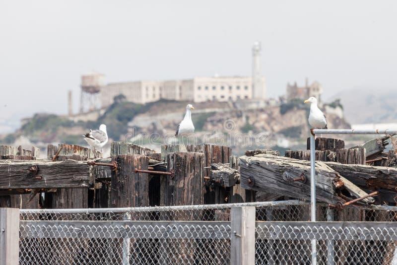 Seaview of Alcatraz royalty free stock photos