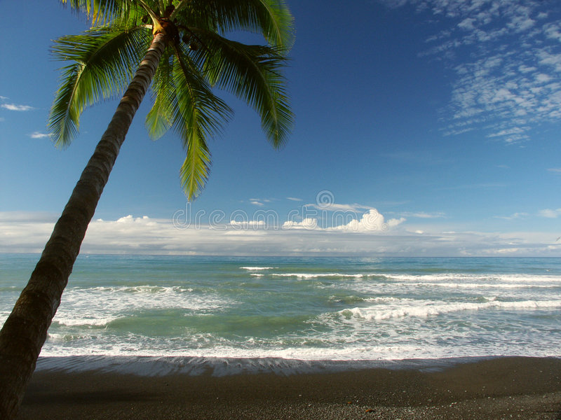 Download Seaview met palmtree stock foto. Afbeelding bestaande uit strand - 29480