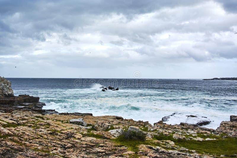 Seaview ondeggia in Hermanus, Sudafrica fotografie stock libere da diritti