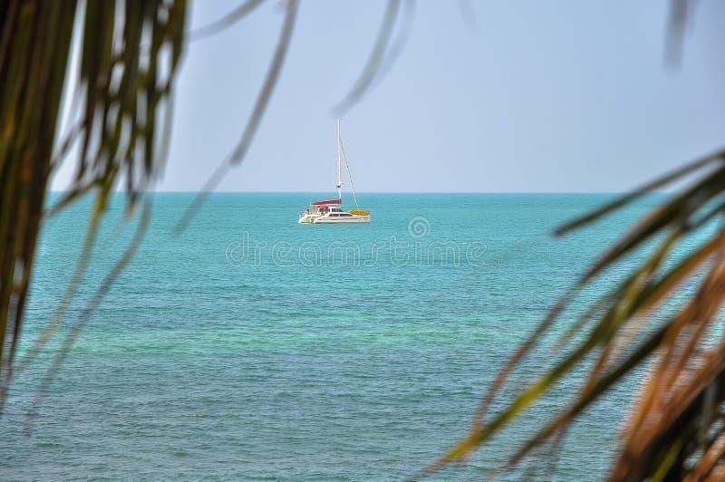 Seaview und ein Katamaran auf dem Horizont durch die Palmblätter lizenzfreie stockfotografie