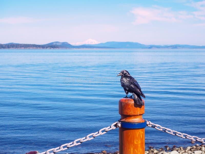 Seawalk em Sidney, ilha de Vancôver, Columbia Britânica imagens de stock