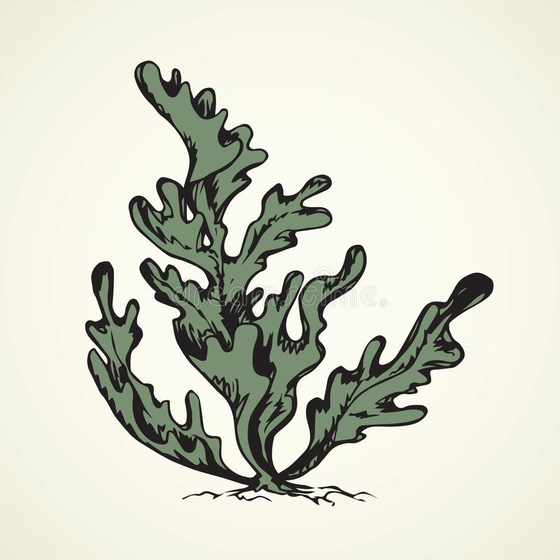 seaweed предпосылка рисуя флористический вектор травы