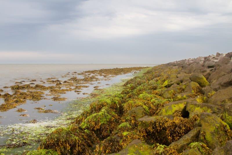 seaweed fotos de stock