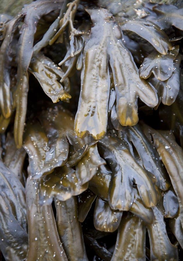 Download Seaweed stock image. Image of salt, sand, beach, detail - 11507643