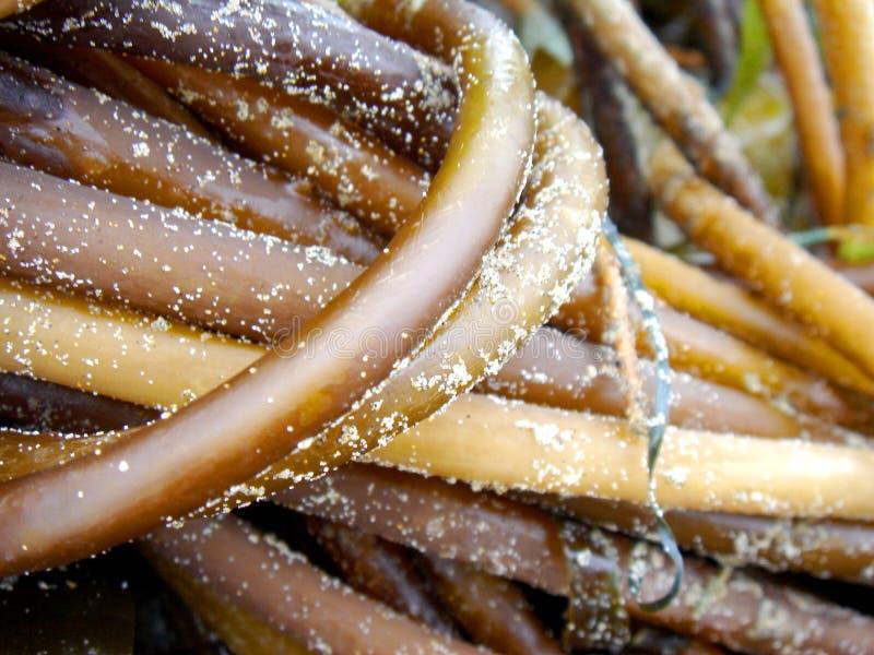 Download Seaweed stock photo. Image of oregon, green, storm, seaweed - 1574550