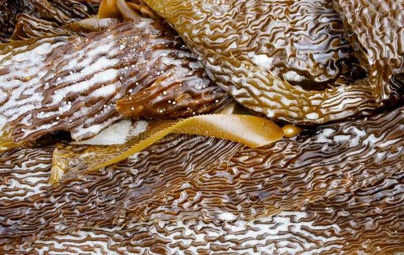 seaweed стоковое изображение rf