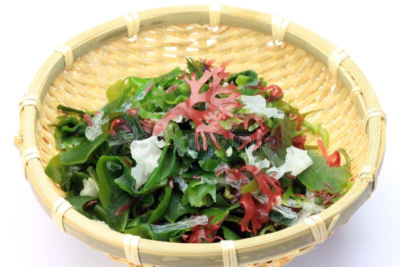 Seaweed стоковые изображения