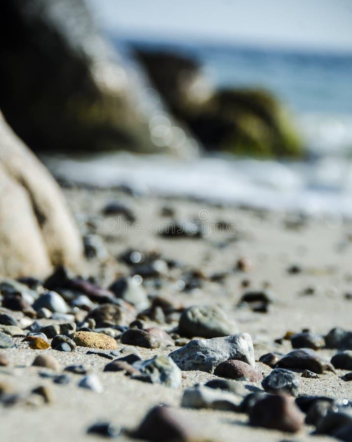 Download Seaweed foto de archivo. Imagen de seaweed, borde, primavera - 42431736