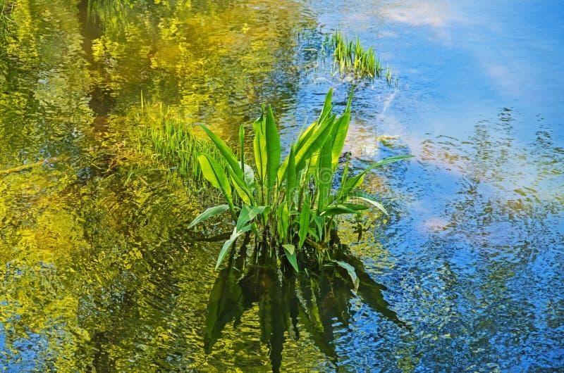 seaweed royaltyfria foton