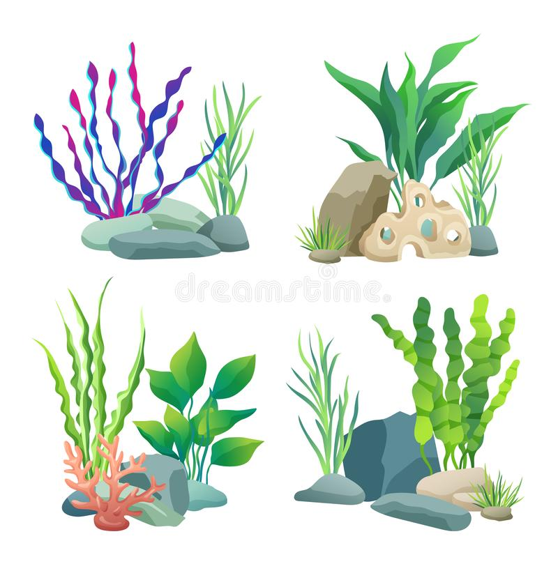 Seaweed for aquarium sketch vector Illustration. Set of hand drawn underwater multicolor marine algae plants, long leaves on stones isolated on white vector illustration