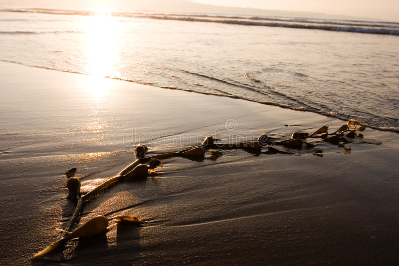 Download Seaweed on Beach 1 stock image. Image of erode, relaxation - 697315