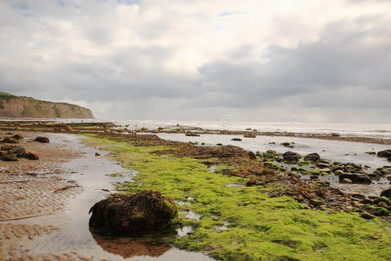 Download Seaweed On The Beach Robin Hoods Bay Stock Photo - Image: 17662632